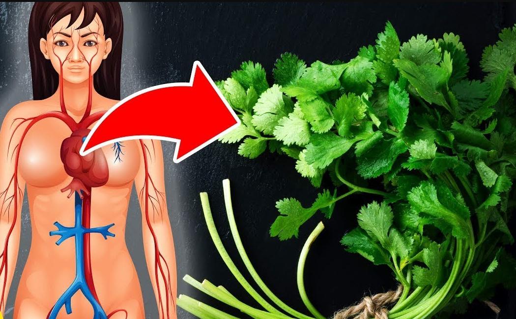 การกินผักชีจะทำให้ร่างกายของคุณดีขึ้น