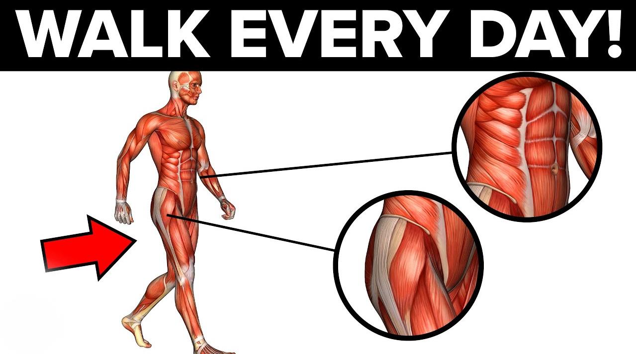 เดินทุกวันและดูว่าเกิดอะไรขึ้นกับร่างกายของคุณ